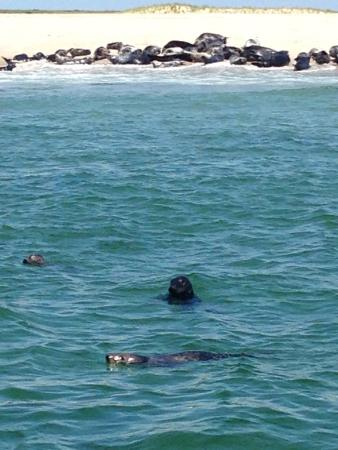 Monomoy Island Excursions: Great experience, up close visit with hundreds of seals and nature. The boat holds only 30 to 40