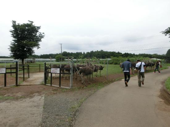 Ostrich Kingdom Ishioka Farm
