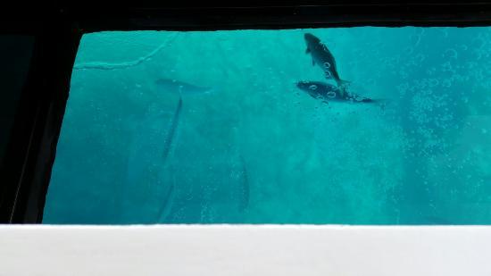 Undewater Observatory Boat Submarine Jr. II : 海中展望船