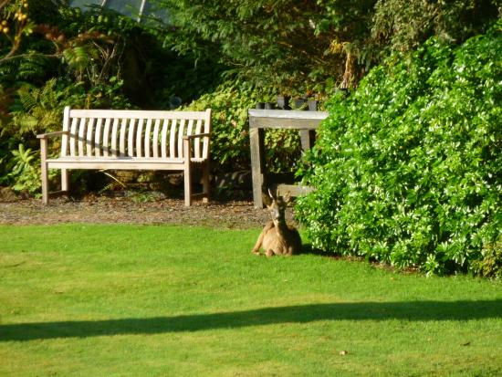 Ascog Hall Gardens and Victorian Fernery : Deer enjoying the morning sun in the park.