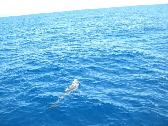 Bild von nager avec les dauphins mandelieu la napoule for Nager avec les dauphins nice
