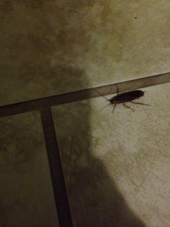 Alajuela, Costa Rica: Found many bugs in our dirty room.