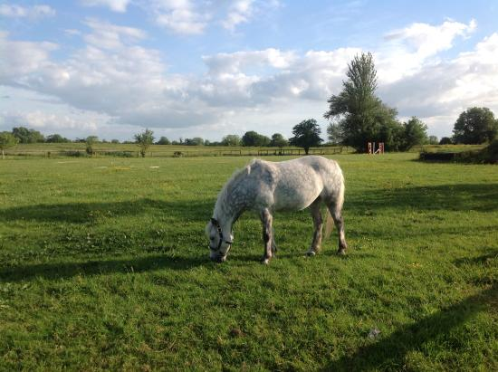 Bullstown, Irlandia: We took a short walk in the evening to see the horses.