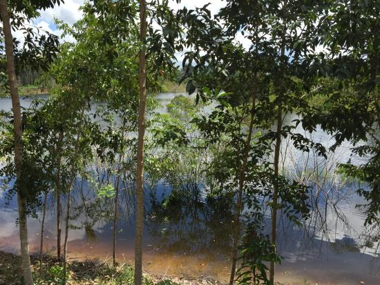 Amazon Turtle Lodge: View from Balcony in high water