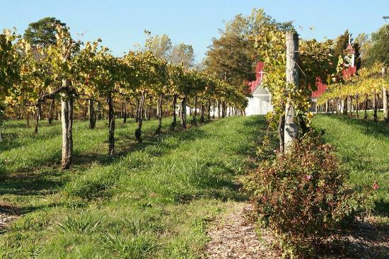 Hampton Inn and Suites Charlottesville - At The University: Area Vineyards