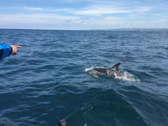 Cornish Sea Tours Photo
