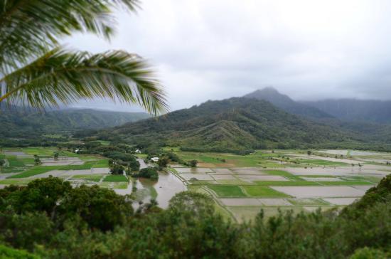 Kalani Kauai