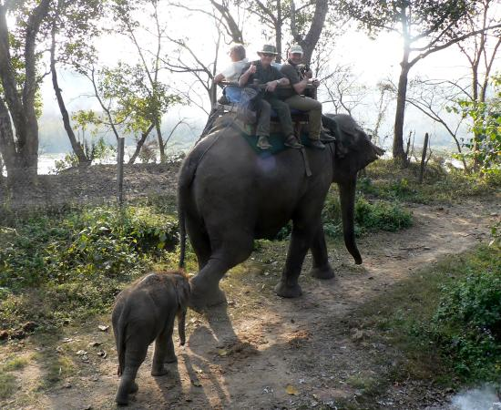 ‪‪Dadeldhura‬, نيبال: Shukla Phanta Reserve - elephant transport‬