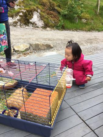 Hamster to entertain the kids