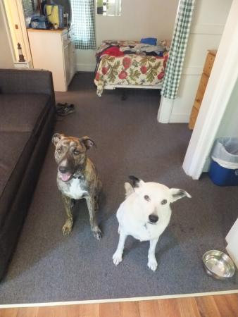 Hinckley's Dreamwood Cabins: dog friendly cottage 8A