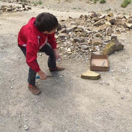 Florissant Fossil Quarry: June 2015