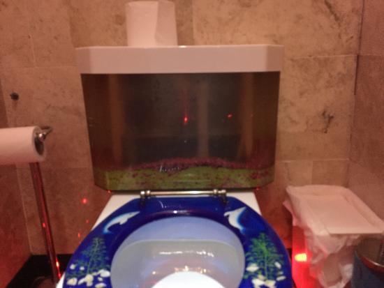 Tarana Lingfield A Fish Tank In The Toilet