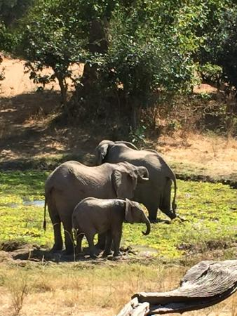 Bilimungwe Bushcamp - The Bushcamp Company: The elephant families,as well as the giraffes, warthogs, impalas,, water bucks and more came dai