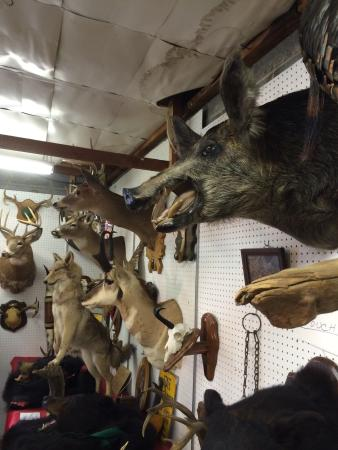 Renningers Antiques & Farmers Market: The Varied Stuff.