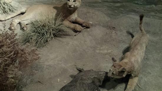 Zoologico Parque del Niño