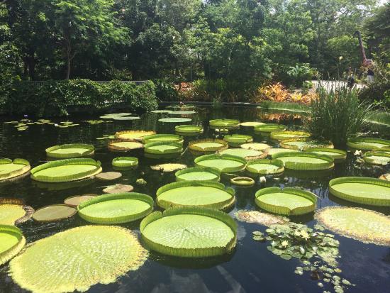 Superieur Naples Botanical Garden