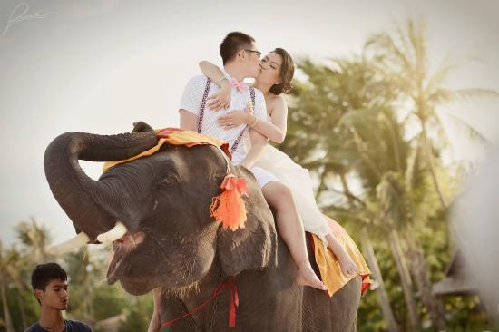 Laem Set, Tailandia: Lovely elephant