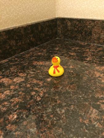 Comfort Inn Troutville: Rubber Ducky