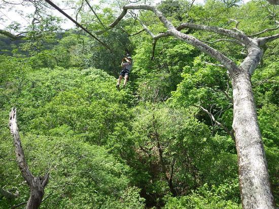 Da Flying Frog Canopy Tours : Zipline