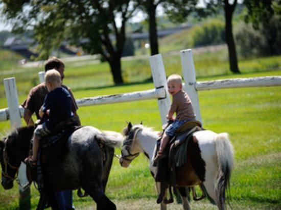 Timber Ridge Lodge & Waterpark: equine