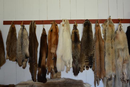 Grand Portage, MN: Les fourures.