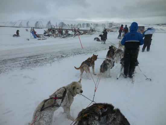 Svalbard Husky: Hitching the huskies to the sled