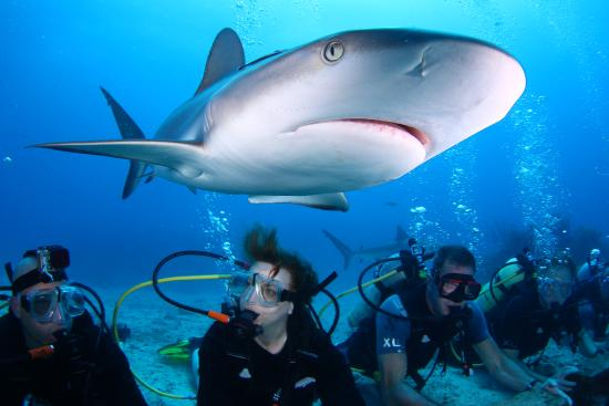Two Tank Scuba Dive Adventure from St Maarten: Shark Dive