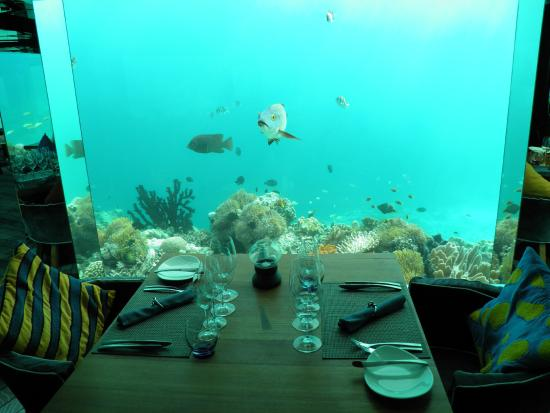 sea underwater restaurant - Underwater World Restaurant