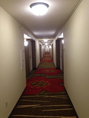 Hilton Garden Inn San Francisco Airport North: The hallway to my room.