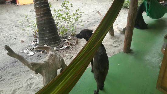 Camping Iguana