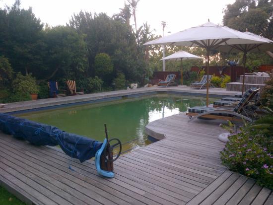 Lezard Bleu: La piscine et ses transats avec vue sur Table Mountain