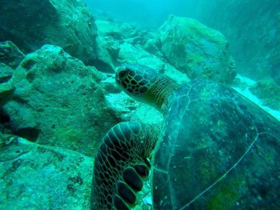 Darwin Scuba Dive : photo0.jpg