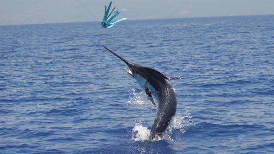Anxious Sportfishing Charters