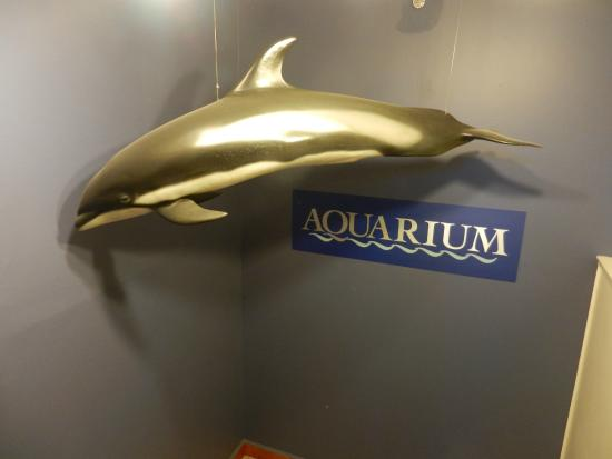 Aquarium Picture Of Cape Cod Museum Of Natural History