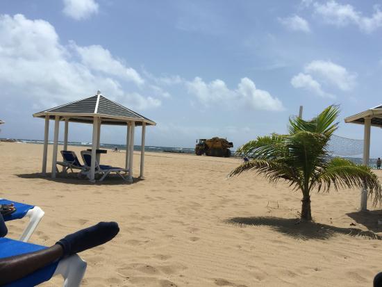 St Kitts Marriott Resort The Royal Beach Work On Seaweed Removal