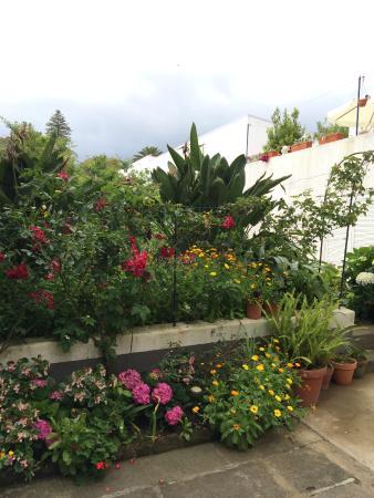 Casa Vitoriana: The garden and courtyard arrea