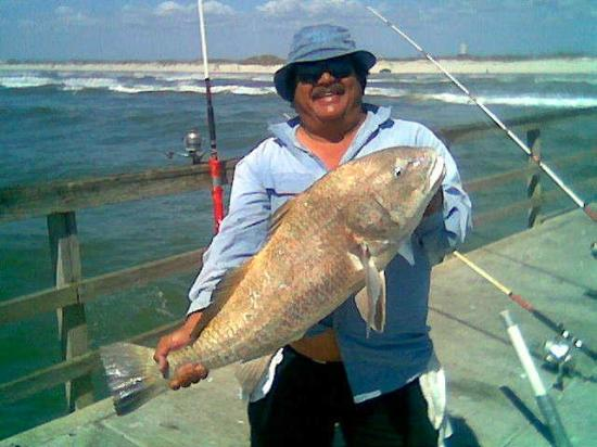 Big lou with big black drum picture of bob hall pier for Fishing report corpus christi texas
