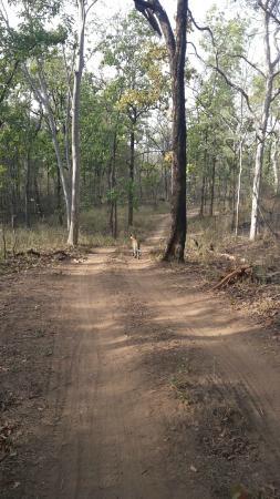 The Bori-Saptura Tiger Reserve