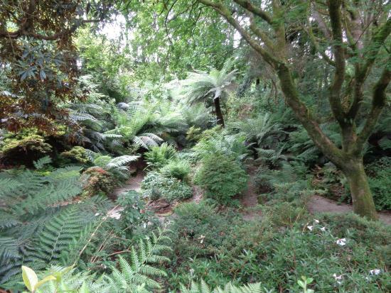 Grampound, UK: Trewithen Gardens