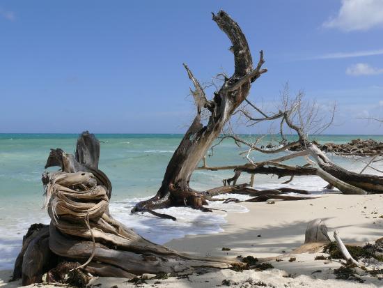 Islander Hotel: la plage