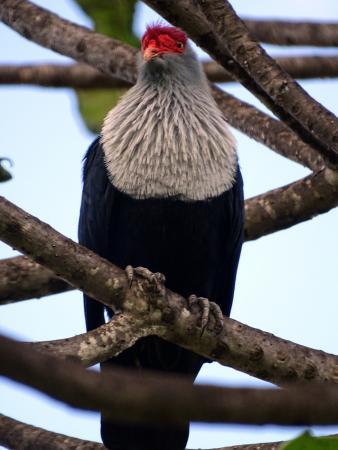 Islander Hotel: un pigeons hollandais