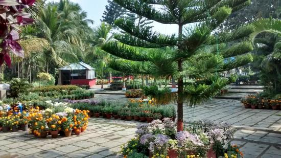 Toshali Sands: Garden near pool area