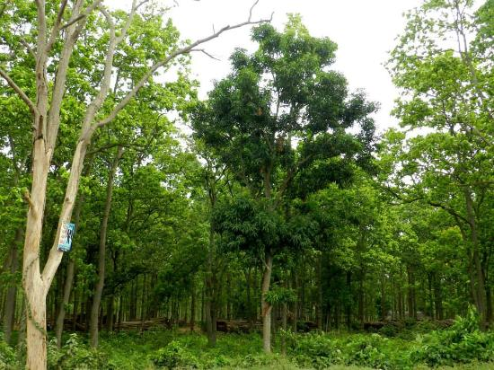 Bankura, India: Joypur forest