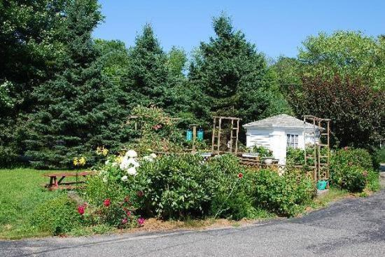Homestead Motel and Cottages: Garden
