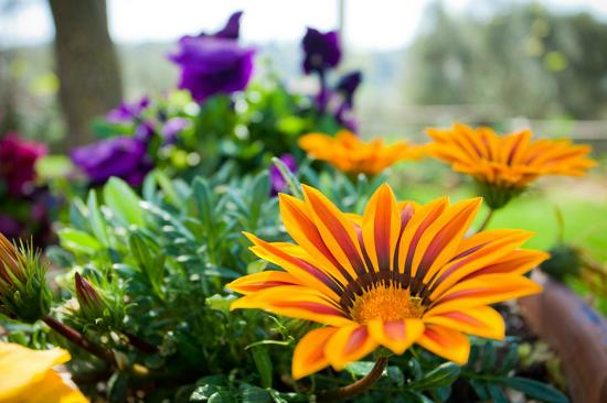 Agriturismo Saragiolo : relax nel giardino