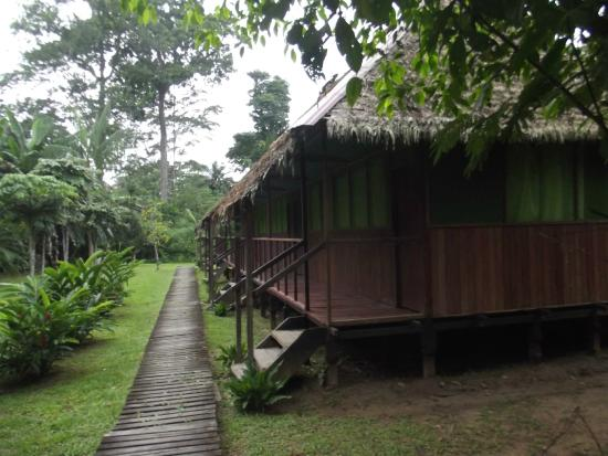 Cayman Lodge Amazonia : lodge