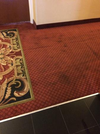 Wingate by Wyndham Columbia/Harbison: Stained hallway carpet