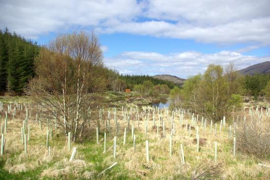 Highland Titles Nature Reserve: New Scottish trees being planted