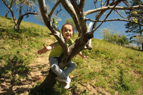 Txindurri Iturri Sidreria y Casa Rural: Jugando