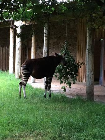 Chester Zoo Loveley Day Out And Weather